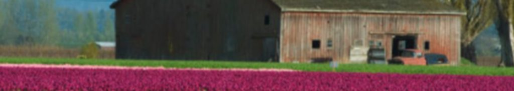 Tulip Field and barn image