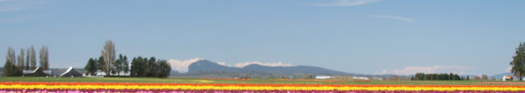 Tulip fields of Skagit County
